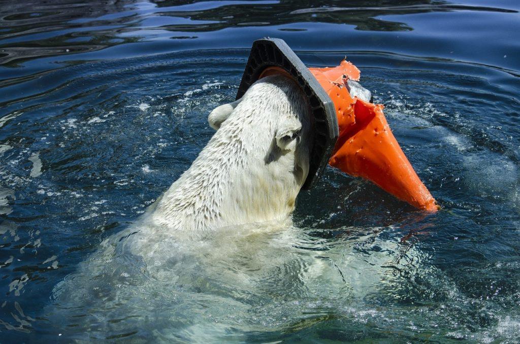 ours polaire emprisonné par un déchet en plastique