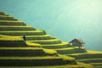 Alibaba-se-lance-dans-agriculture-avec-intelligence-artificielle-sauvages-e-revue