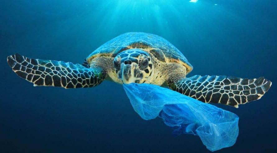 tortue sac plastique dans la mer Méditerranée